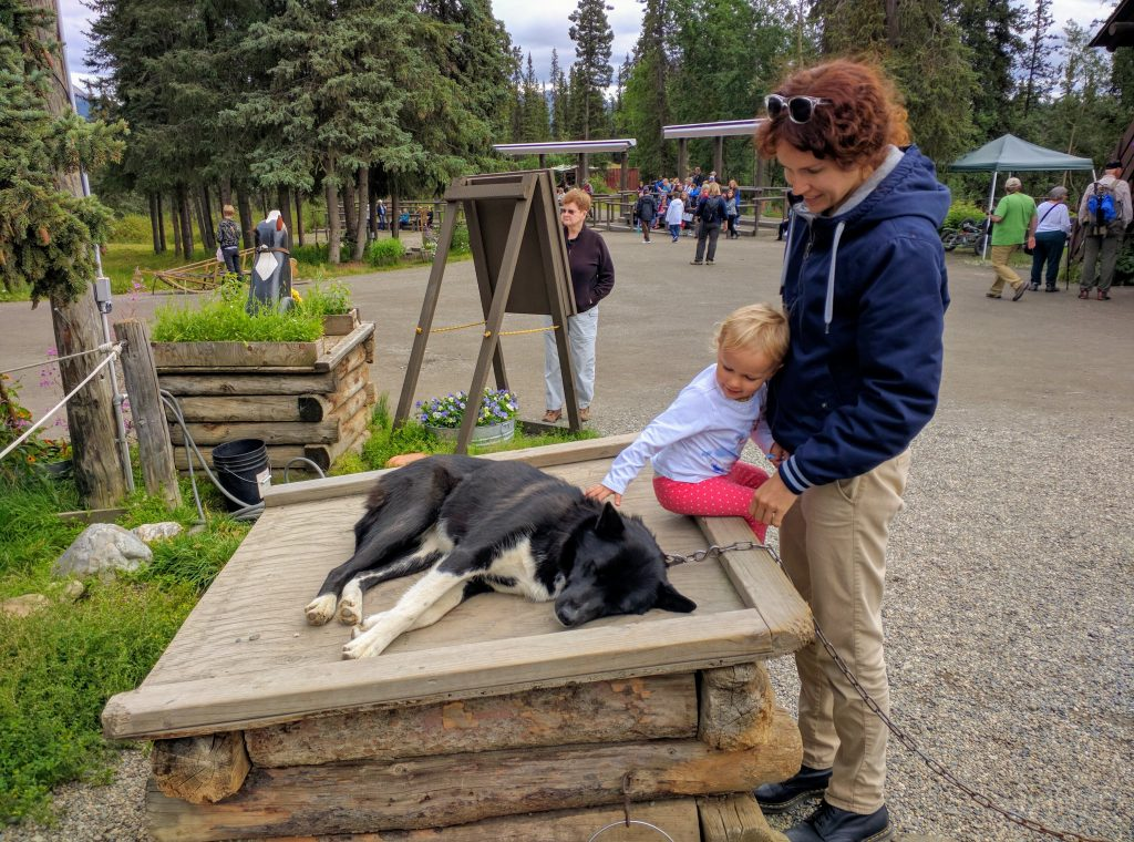 Alaska with kids was unforgettable experience. Petting Denali Ranger dog