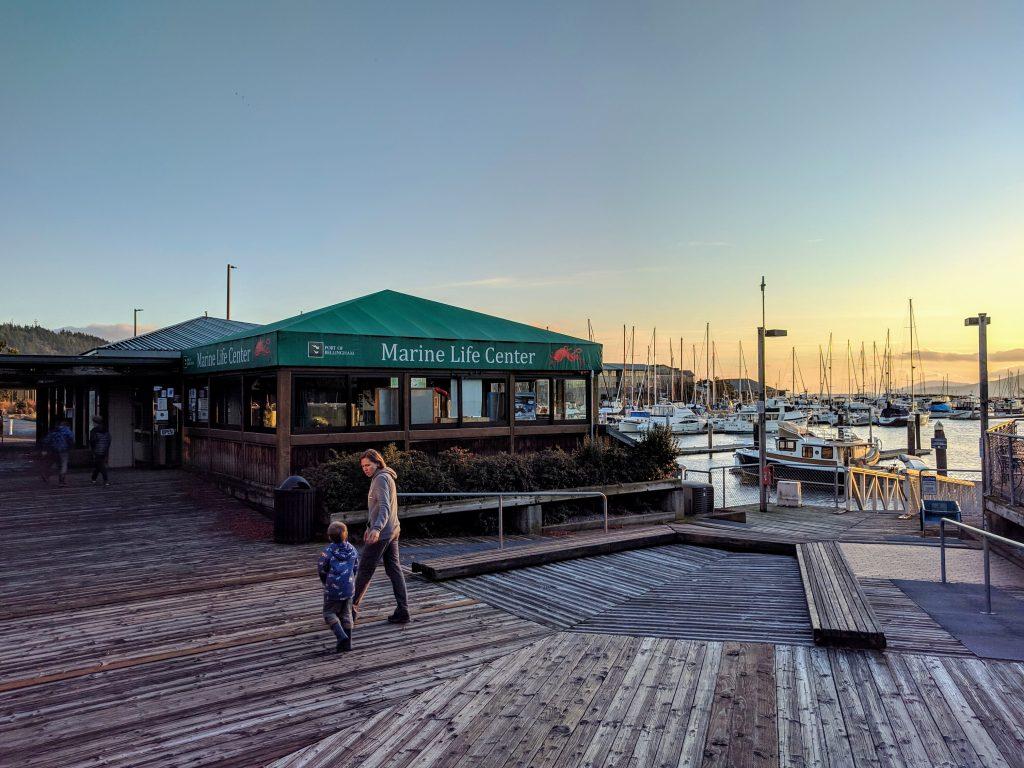 Bellingham Marine Life Center