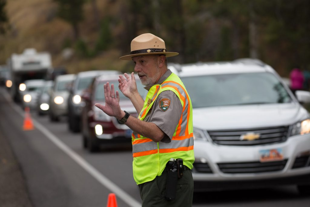Ranger directing traffic at Yellowstone National Park