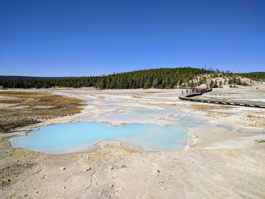 """""""Stinky"""" taking started at this place, Norris Geyser Basin"""