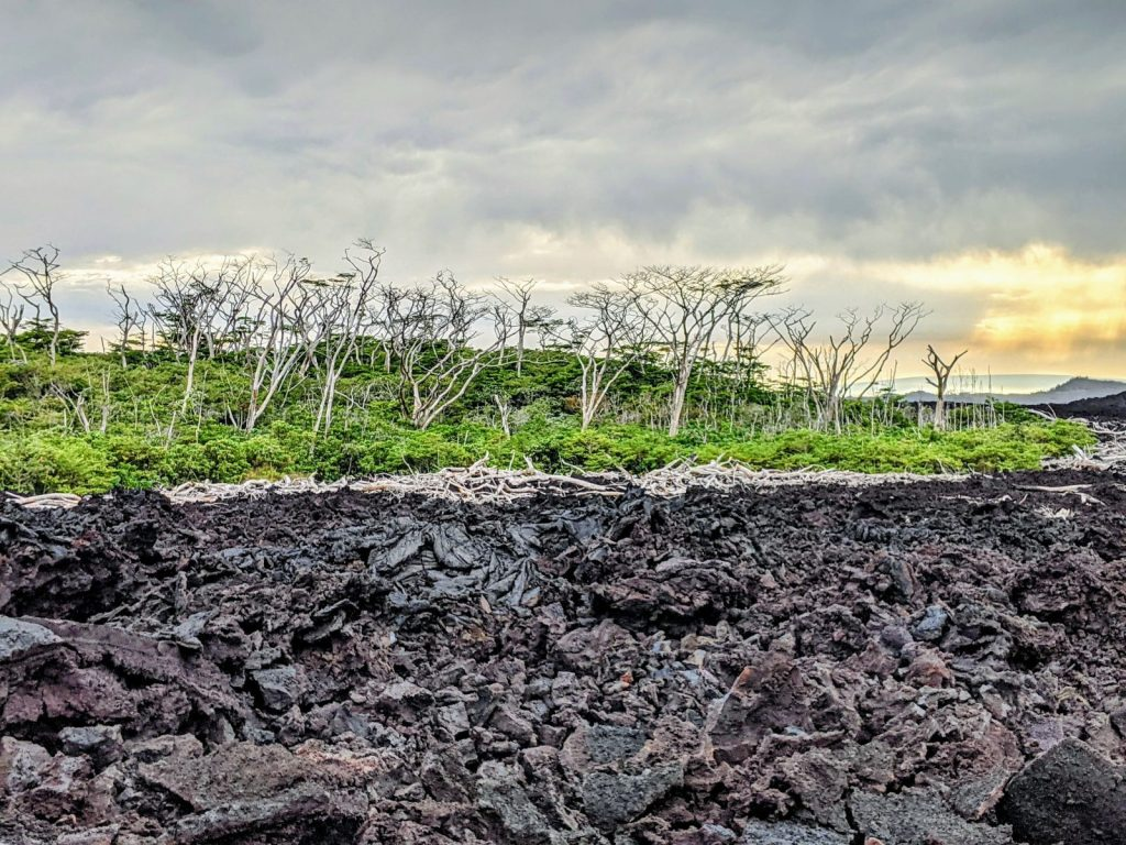 Hawaiian Volcanoes: Big Island. Survival forest and the one, gone under lava. I bet there is no place on Earth with such scenery!