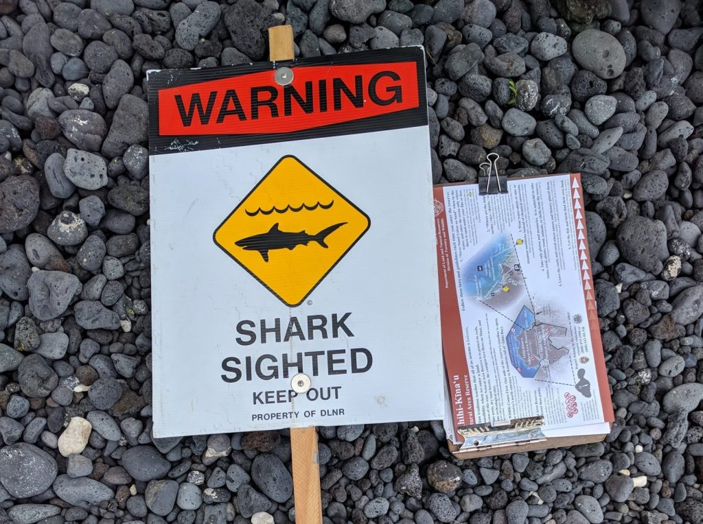 Maui beaches: sharks are possible, but rare sight